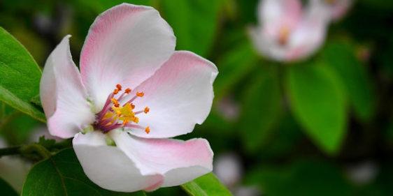 Études cliniques sur les élixirs floraux